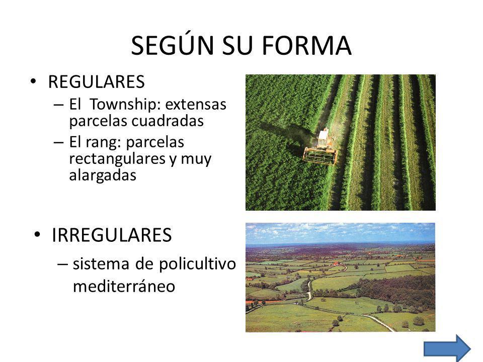 SEGÚN SU FORMA IRREGULARES REGULARES
