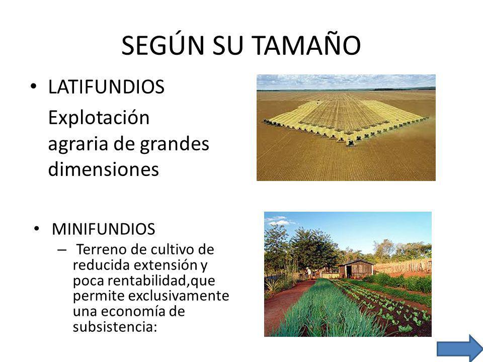 SEGÚN SU TAMAÑO LATIFUNDIOS Explotación agraria de grandes dimensiones