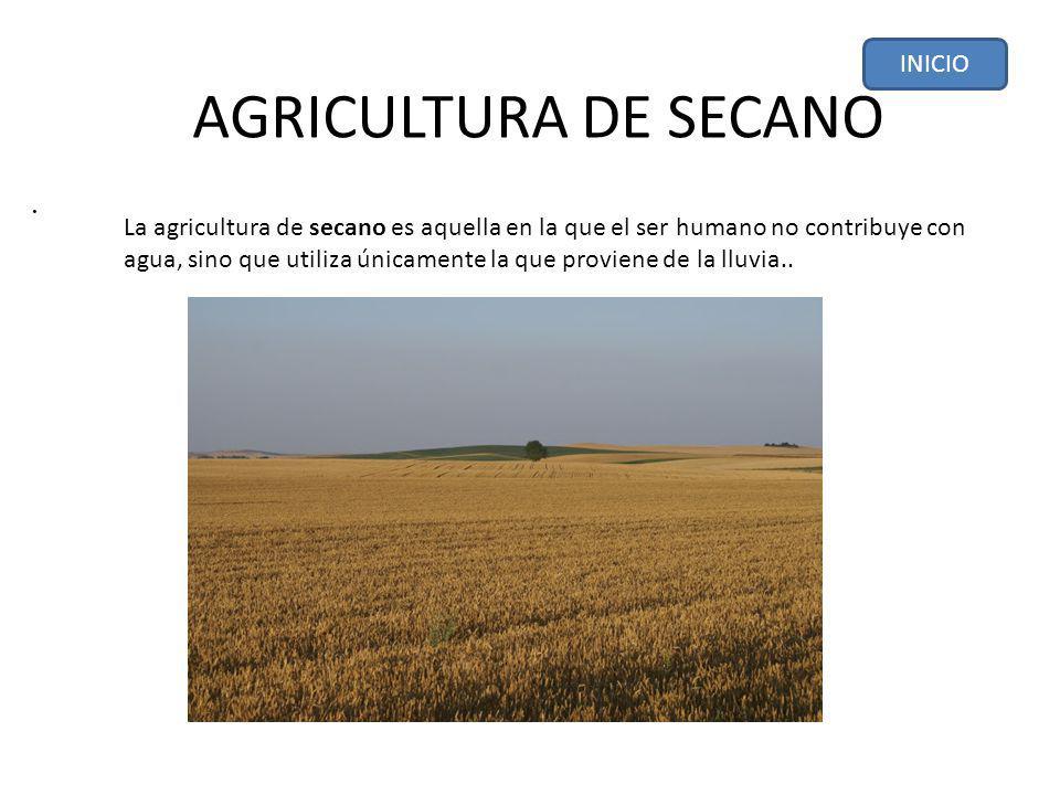 AGRICULTURA DE SECANO . INICIO