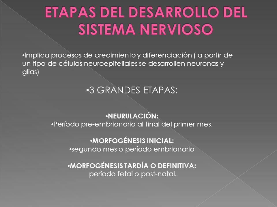 ETAPAS DEL DESARROLLO DEL SISTEMA NERVIOSO