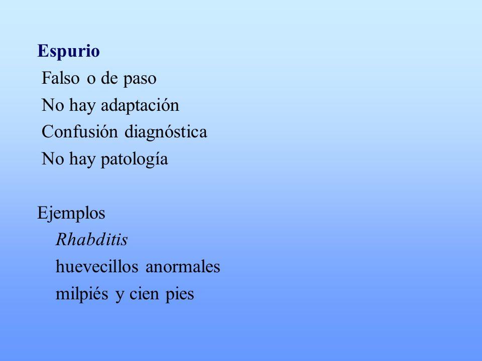 EspurioFalso o de paso. No hay adaptación. Confusión diagnóstica. No hay patología. Ejemplos. Rhabditis.