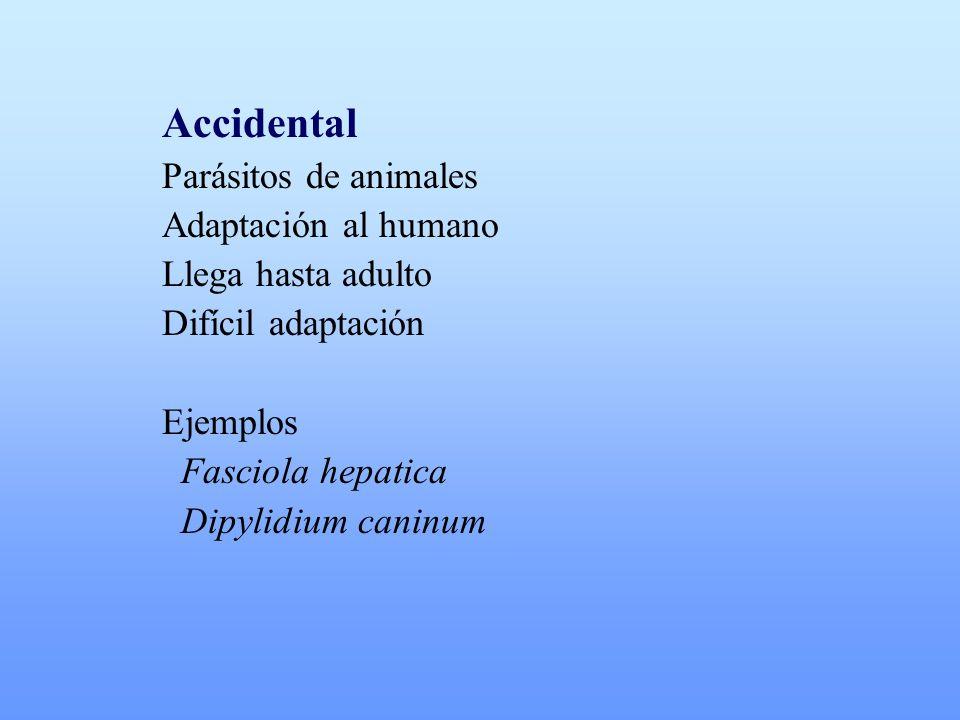 Accidental Parásitos de animales Adaptación al humano