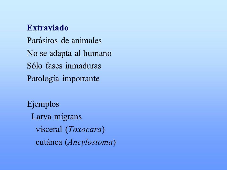 Extraviado Parásitos de animales. No se adapta al humano. Sólo fases inmaduras. Patología importante.