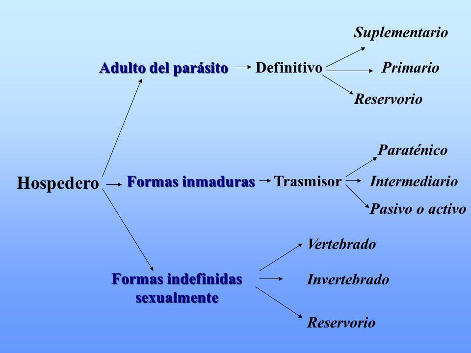 Hospedero Suplementario Adulto del parásito Definitivo Primario