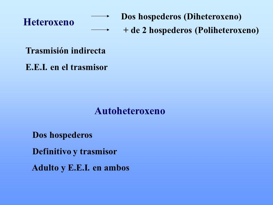 Heteroxeno Autoheteroxeno Dos hospederos (Diheteroxeno)