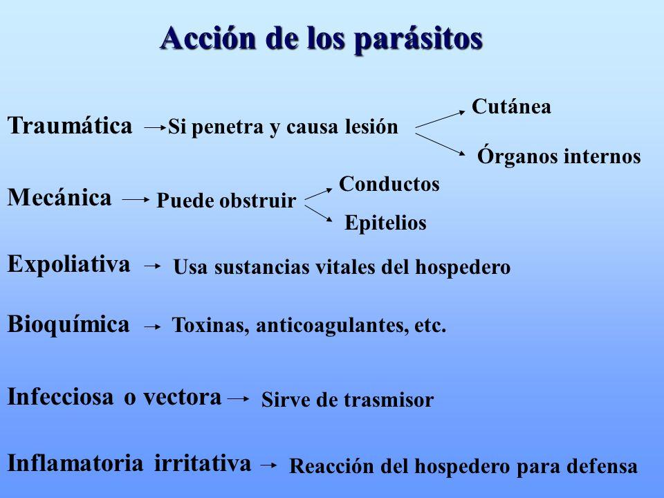 Acción de los parásitos