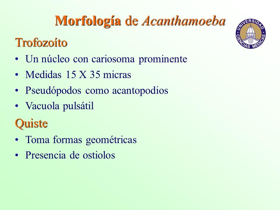 Morfología de Acanthamoeba