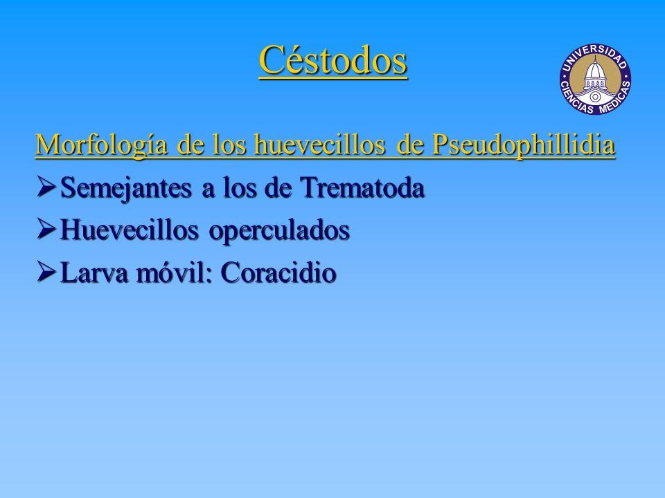 Céstodos Morfología de los huevecillos de Pseudophillidia