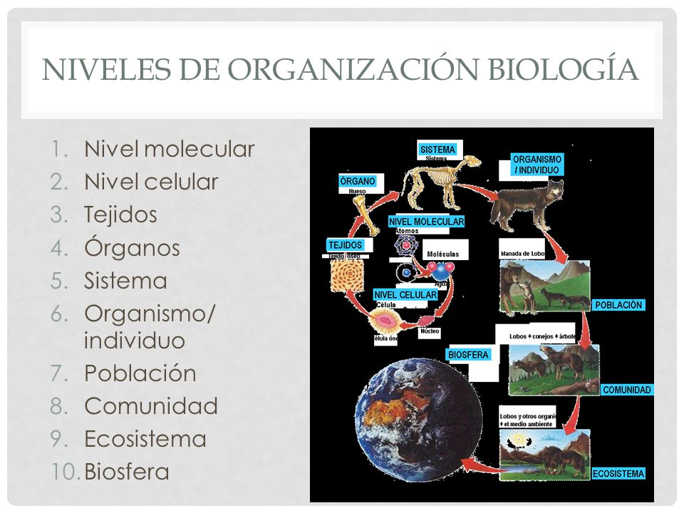 Niveles de organización biología