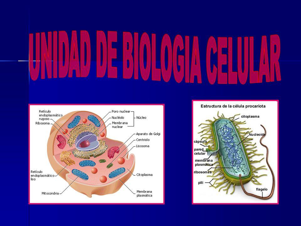 UNIDAD DE BIOLOGIA CELULAR