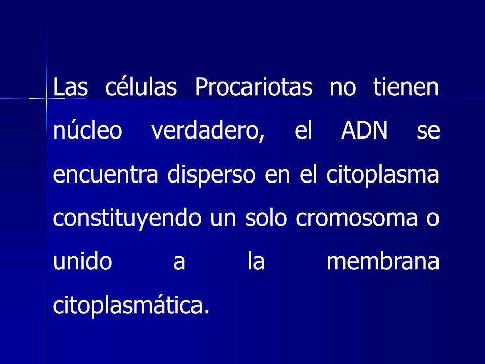 Las células Procariotas no tienen núcleo verdadero, el ADN se encuentra disperso en el citoplasma constituyendo un solo cromosoma o unido a la membrana citoplasmática.