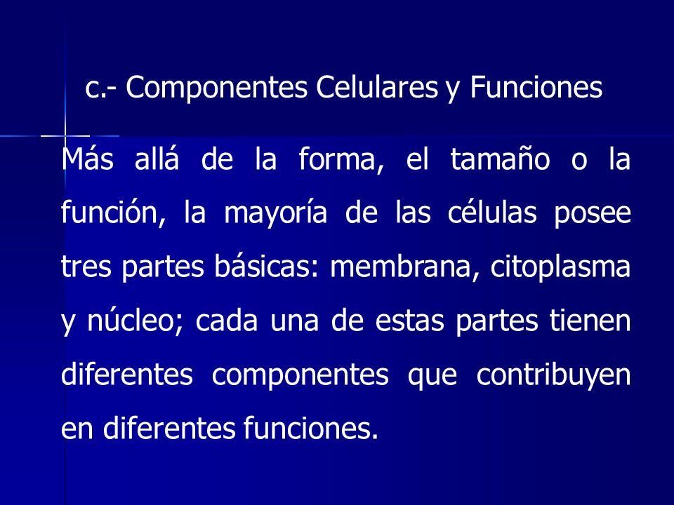 c.- Componentes Celulares y Funciones