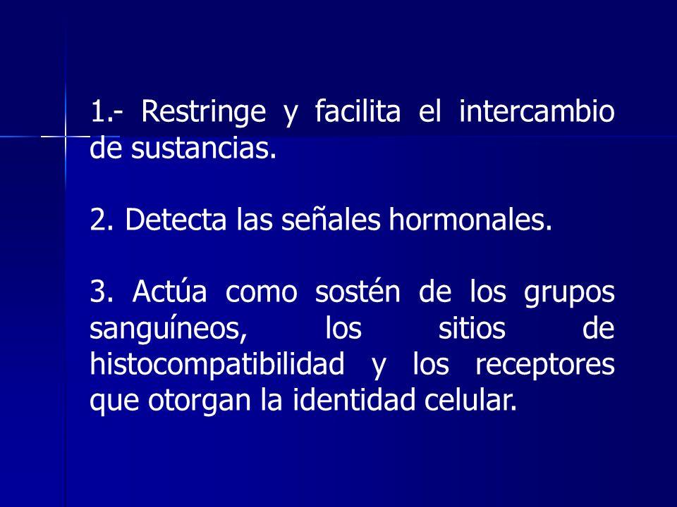 1.- Restringe y facilita el intercambio de sustancias.
