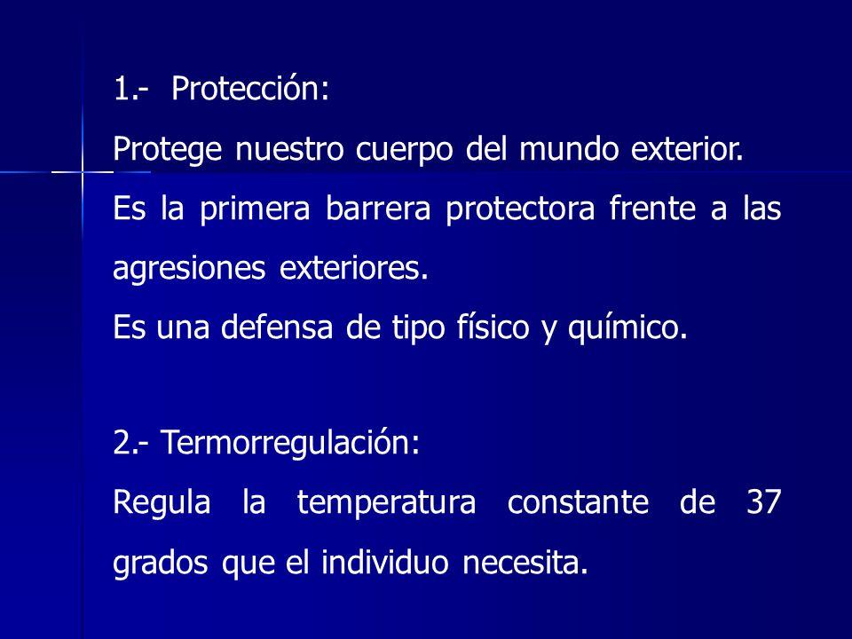 1.- Protección: Protege nuestro cuerpo del mundo exterior. Es la primera barrera protectora frente a las agresiones exteriores.