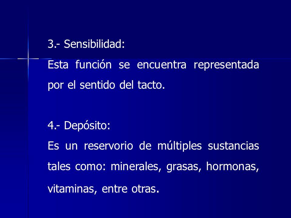 3.- Sensibilidad: Esta función se encuentra representada por el sentido del tacto. 4.- Depósito: