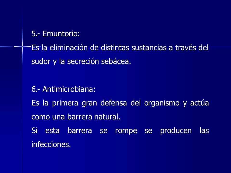5.- Emuntorio:Es la eliminación de distintas sustancias a través del sudor y la secreción sebácea. 6.- Antimicrobiana: