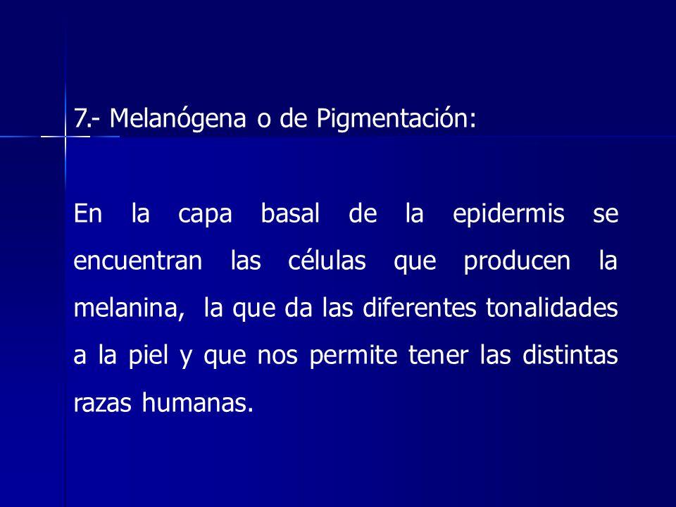 7.- Melanógena o de Pigmentación: