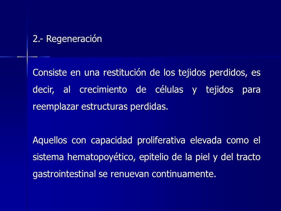 2.- Regeneración