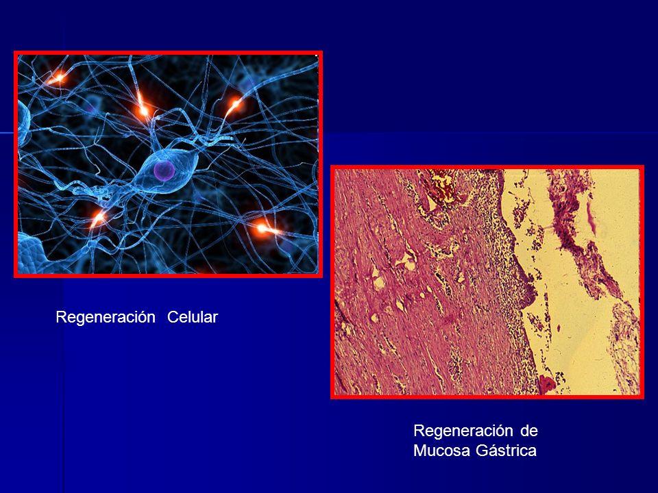 Regeneración Celular Regeneración de Mucosa Gástrica