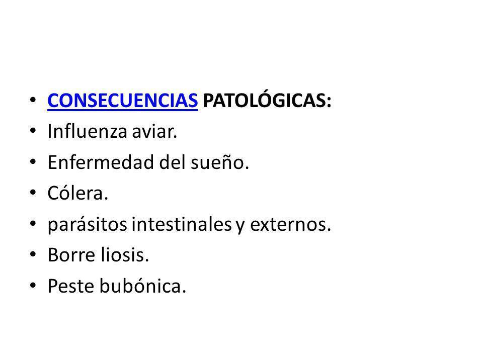 CONSECUENCIAS PATOLÓGICAS: