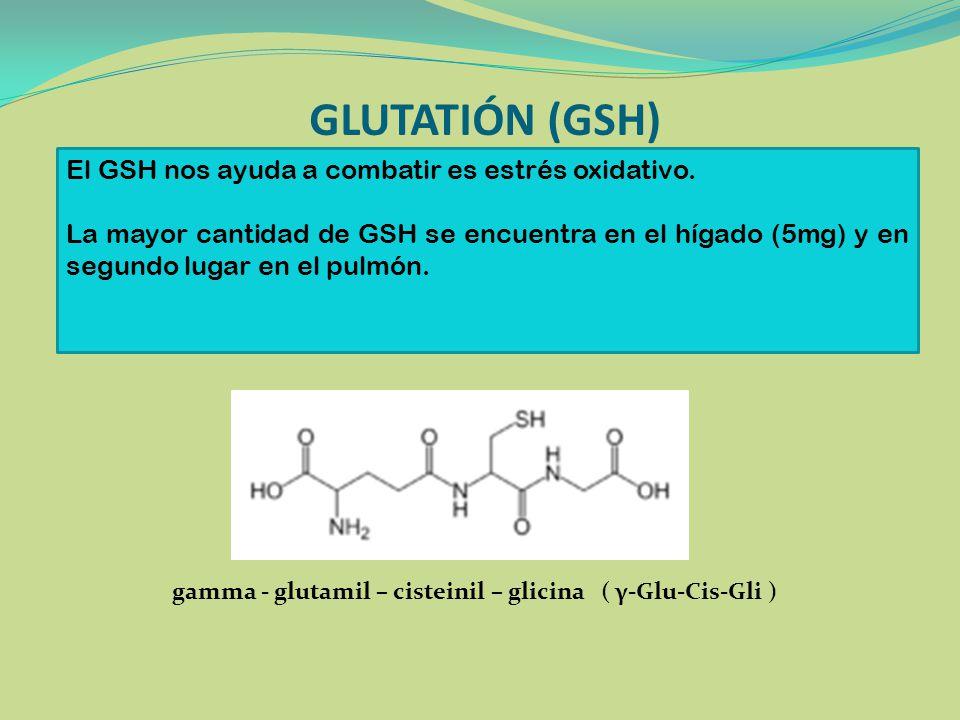 GLUTATIÓN (GSH) El GSH nos ayuda a combatir es estrés oxidativo.