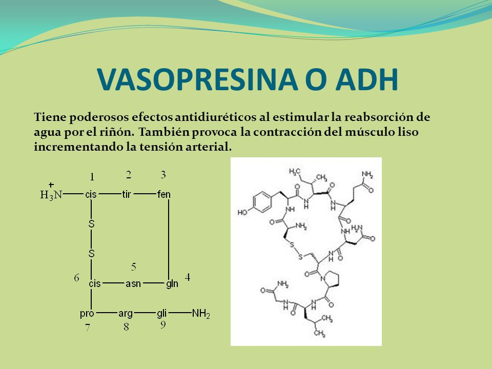 Amino cidos ppt video online descargar for Vaso resina