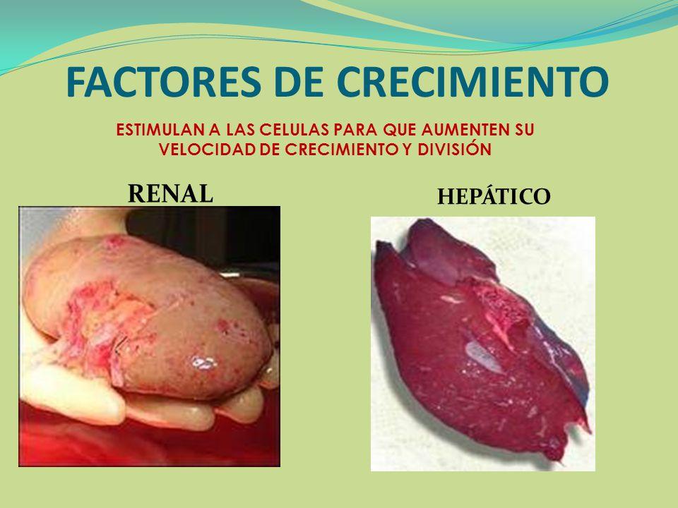 FACTORES DE CRECIMIENTO