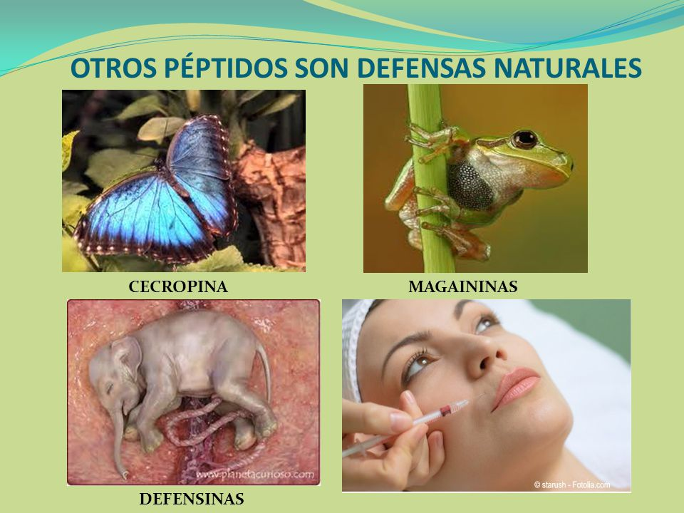 OTROS PÉPTIDOS SON DEFENSAS NATURALES