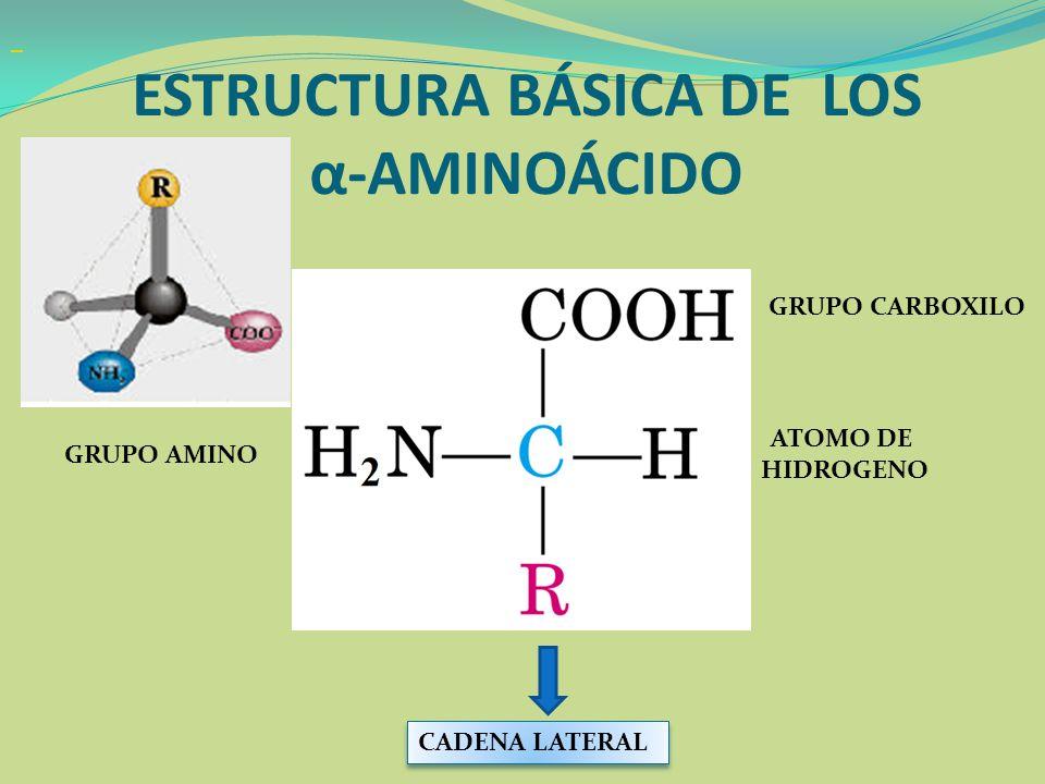 ESTRUCTURA BÁSICA DE LOS α-AMINOÁCIDO