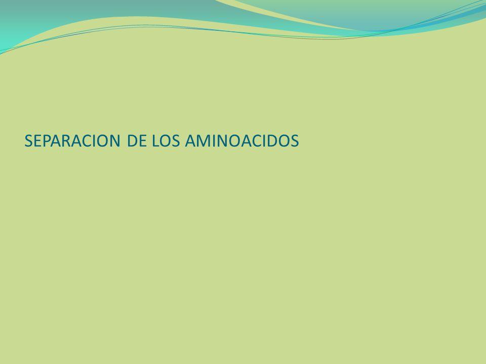 SEPARACION DE LOS AMINOACIDOS