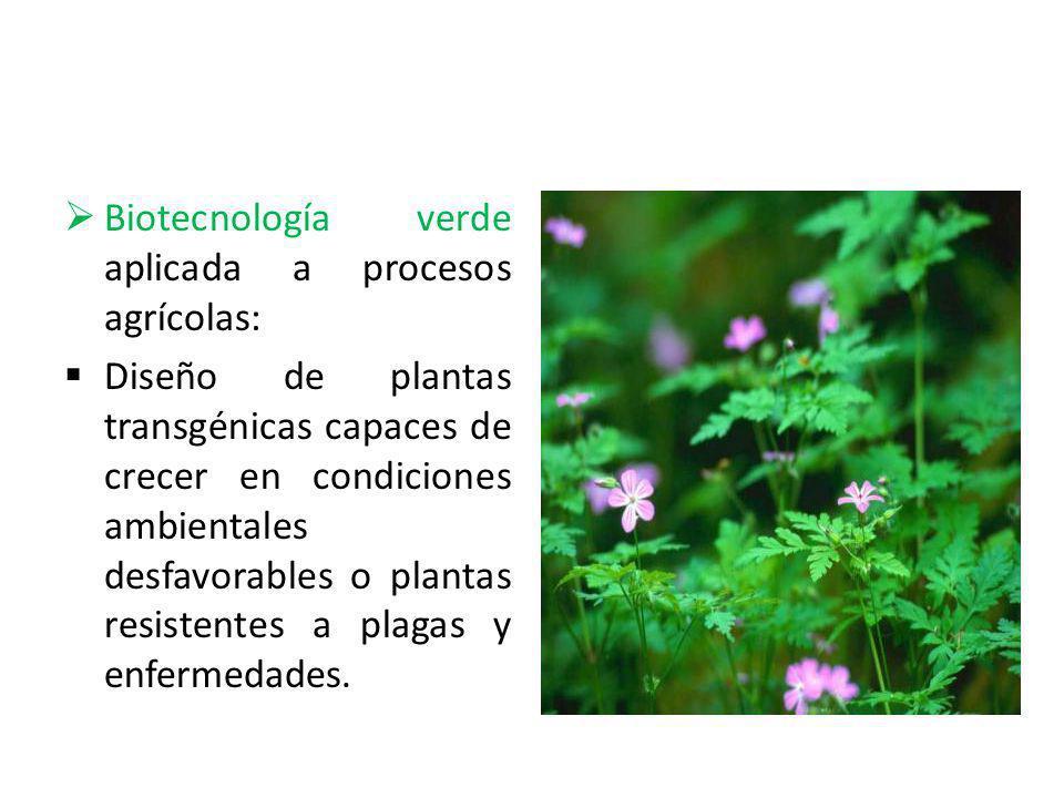 Biotecnología verde aplicada a procesos agrícolas: