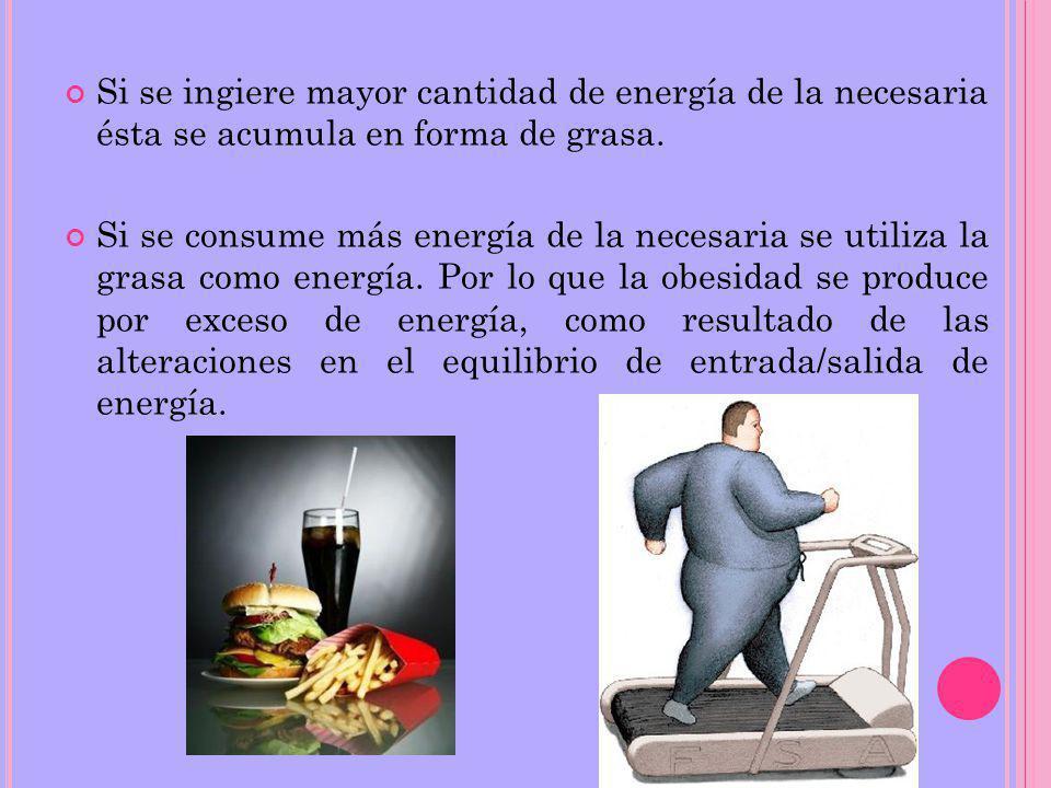 Si se ingiere mayor cantidad de energía de la necesaria ésta se acumula en forma de grasa.