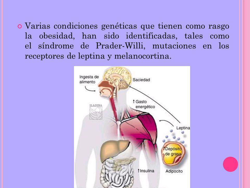 Varias condiciones genéticas que tienen como rasgo la obesidad, han sido identificadas, tales como el síndrome de Prader-Willi, mutaciones en los receptores de leptina y melanocortina.
