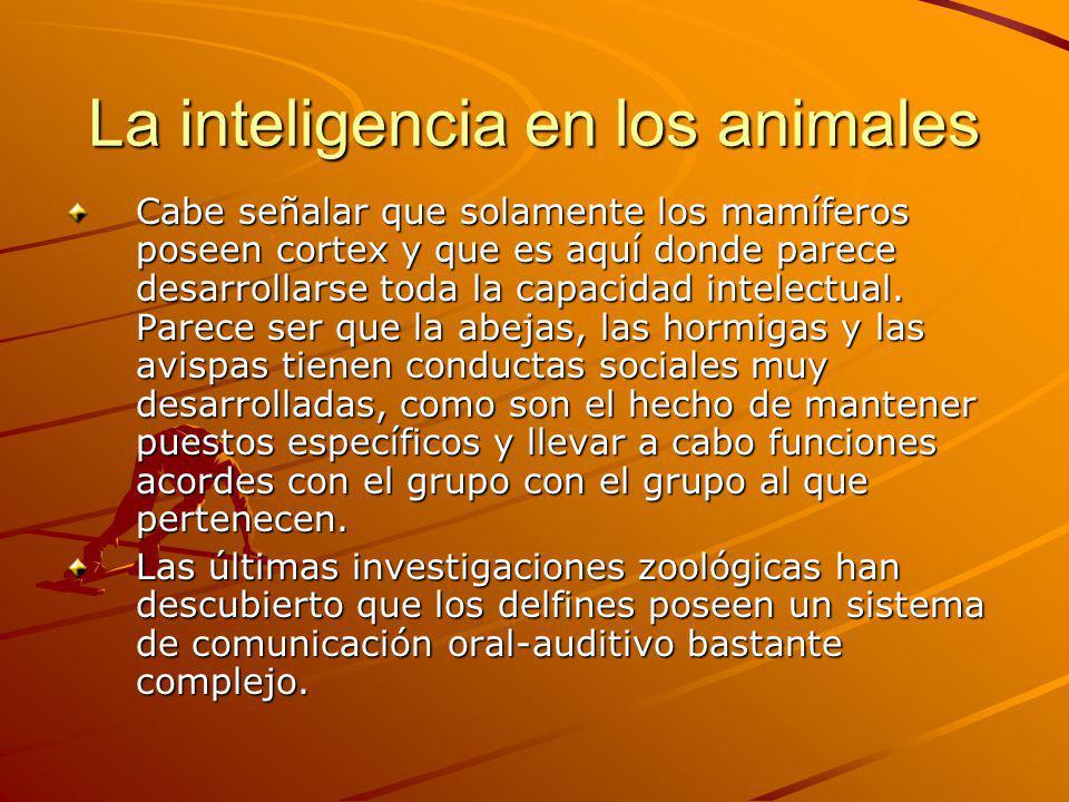 La inteligencia en los animales