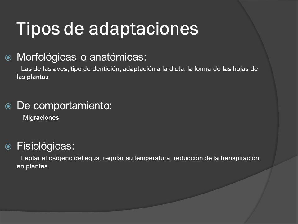 Tipos de adaptaciones Morfológicas o anatómicas: De comportamiento: