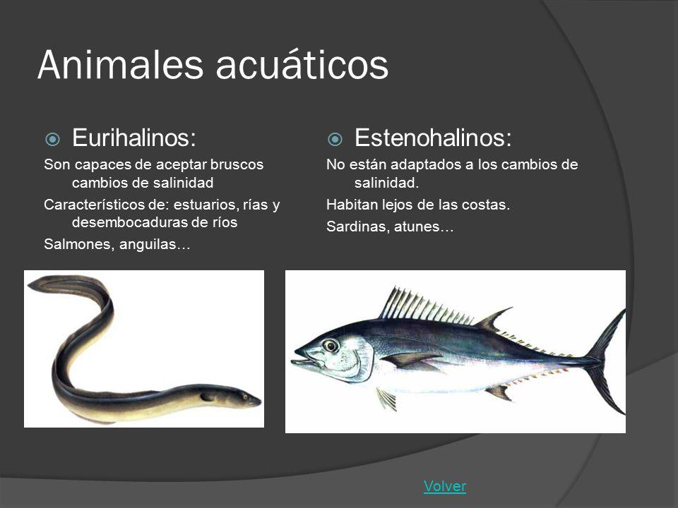 Animales acuáticos Eurihalinos: Estenohalinos: