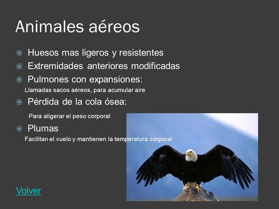 Animales aéreos Huesos mas ligeros y resistentes