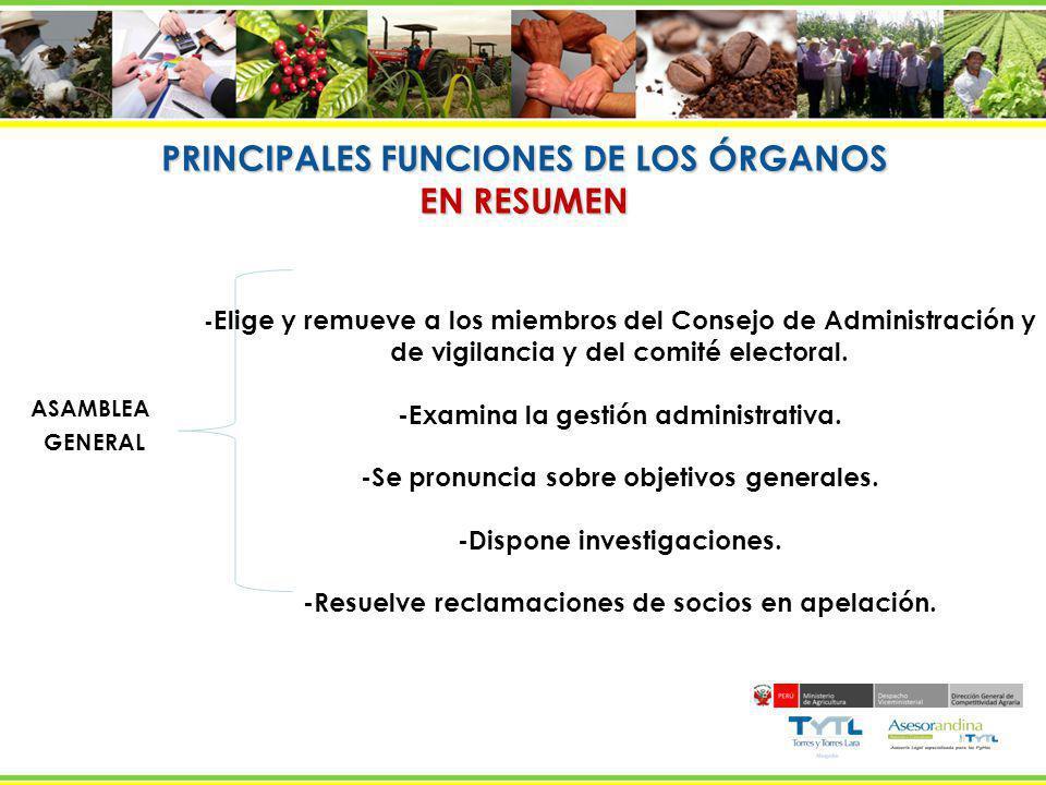 PRINCIPALES FUNCIONES DE LOS ÓRGANOS EN RESUMEN