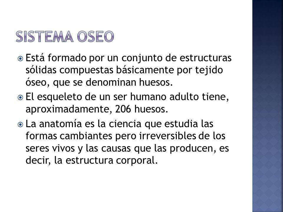 SISTEMA OSEO Está formado por un conjunto de estructuras sólidas compuestas básicamente por tejido óseo, que se denominan huesos.