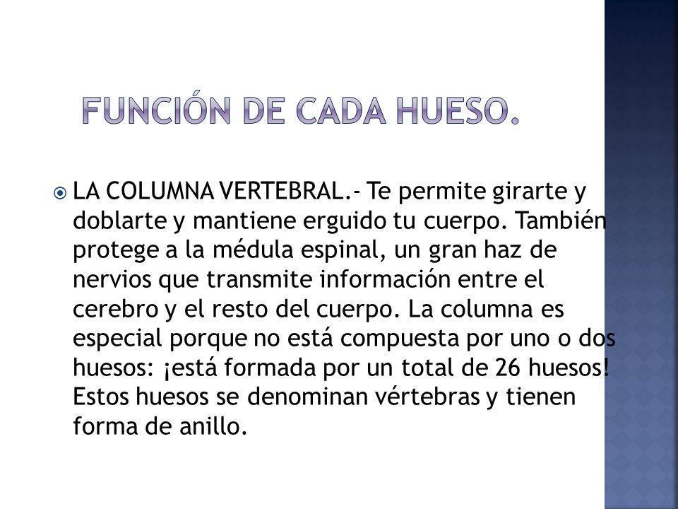 FUNCIÓN DE CADA HUESO.