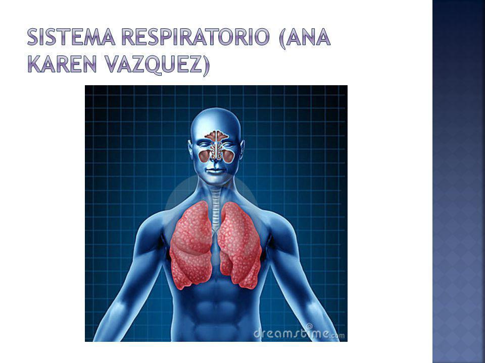 Sistema Respiratorio (Ana karen vazquez)