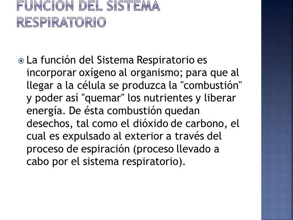 Función del Sistema Respiratorio