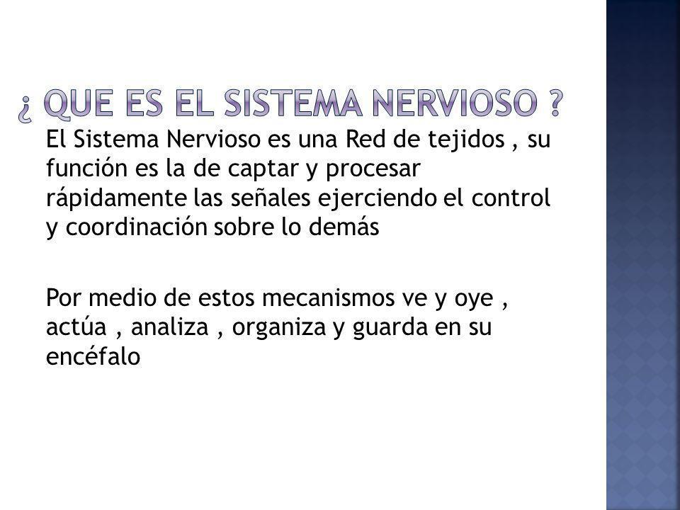 ¿ que es el Sistema Nervioso