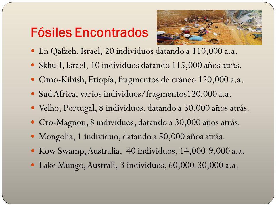 Fósiles Encontrados En Qafzeh, Israel, 20 individuos datando a 110,000 a.a. Skhu-l, Israel, 10 individuos datando 115,000 años atrás.