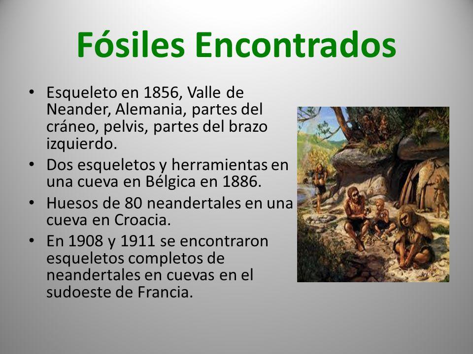 Fósiles Encontrados Esqueleto en 1856, Valle de Neander, Alemania, partes del cráneo, pelvis, partes del brazo izquierdo.