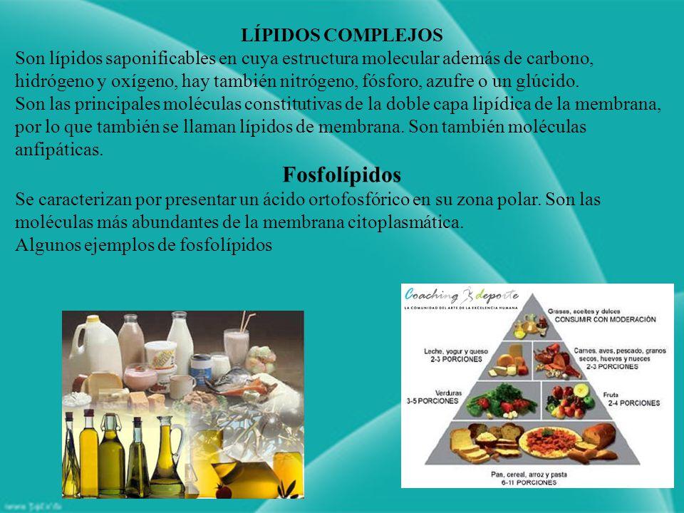 Fosfolípidos LÍPIDOS COMPLEJOS