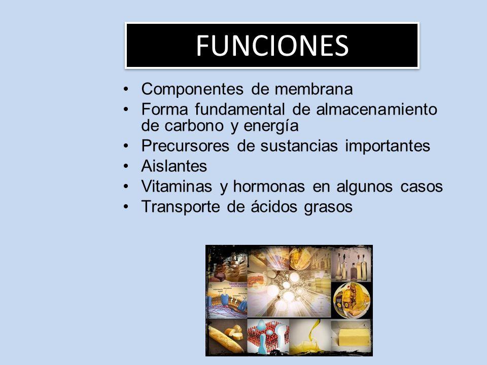 FUNCIONES Componentes de membrana