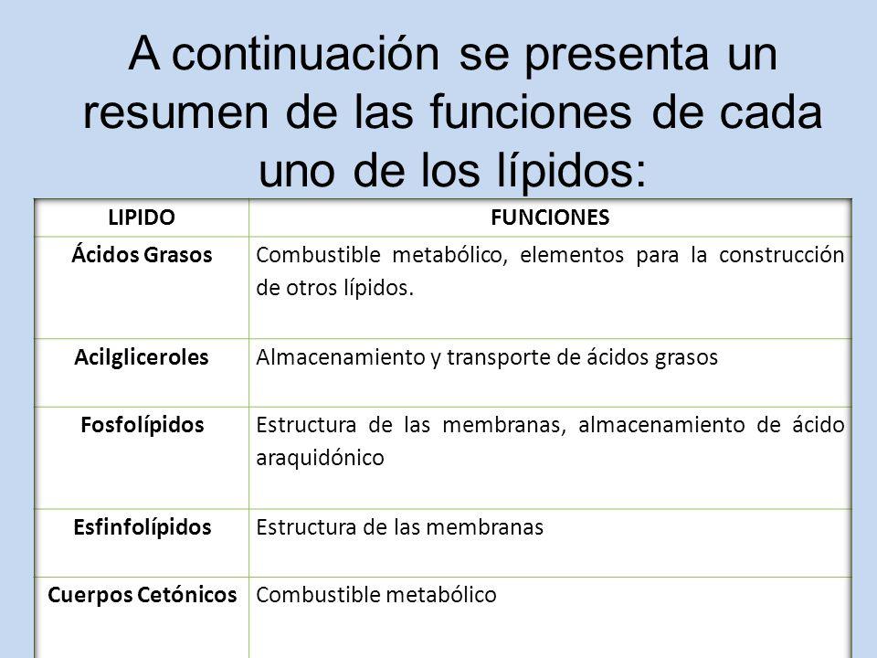 A continuación se presenta un resumen de las funciones de cada uno de los lípidos: