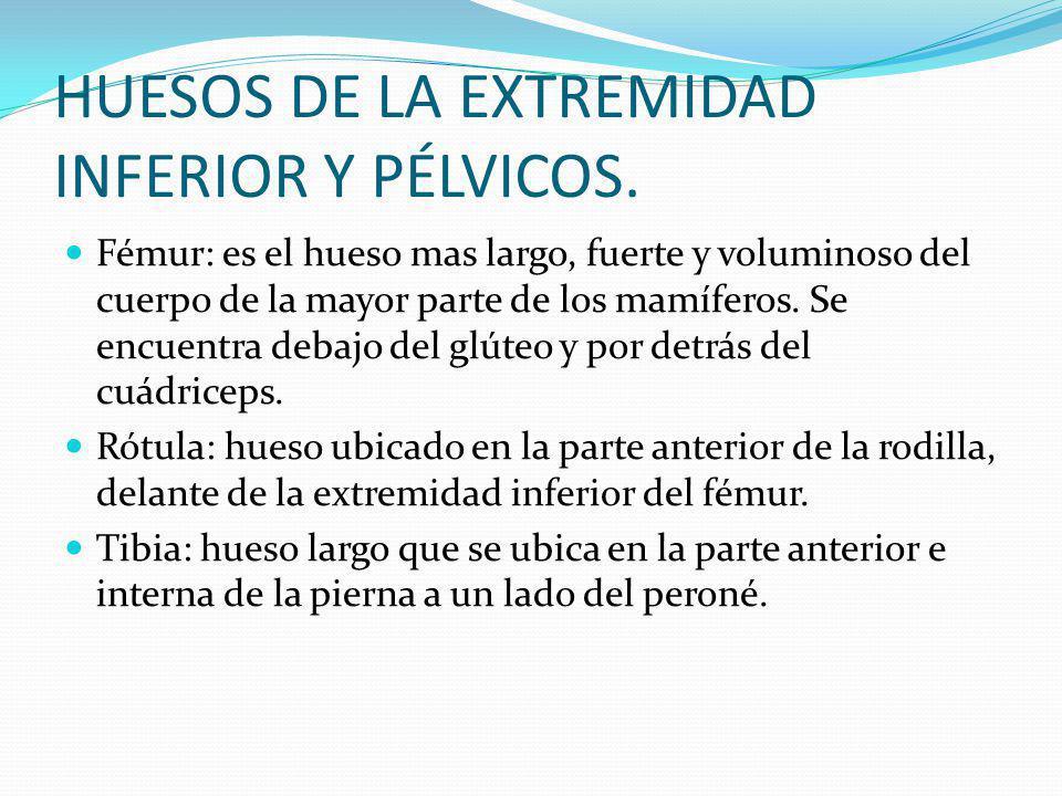 HUESOS DE LA EXTREMIDAD INFERIOR Y PÉLVICOS.