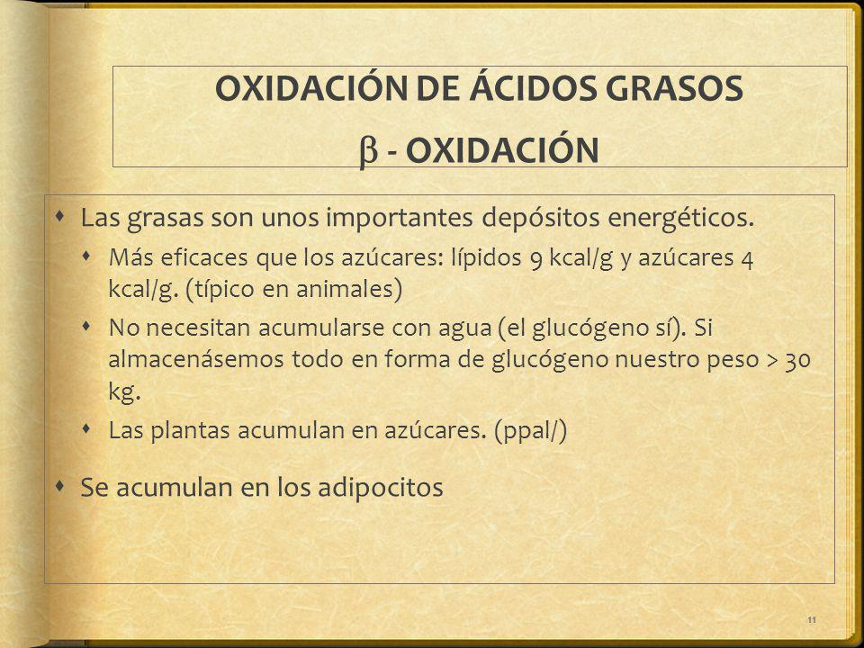 OXIDACIÓN DE ÁCIDOS GRASOS b - OXIDACIÓN